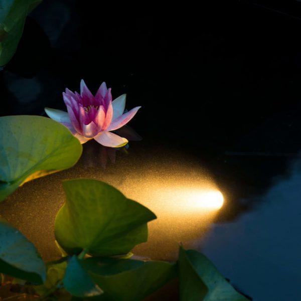 Ubbink Onderwaterlamp LED Aqua Spotlight 6 W